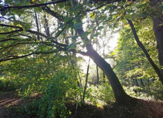 Entschleunigung Herbst Rotbachtal