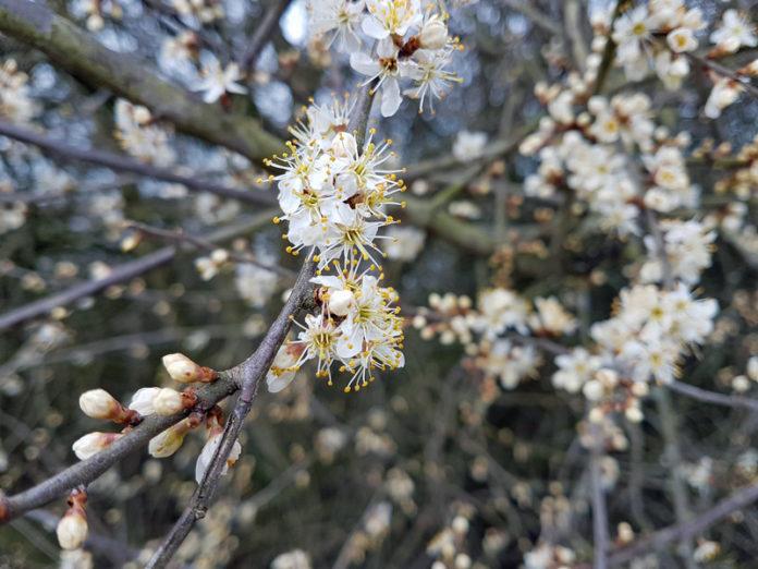 Frühling 2018 Die kleinen Wunder der Natur