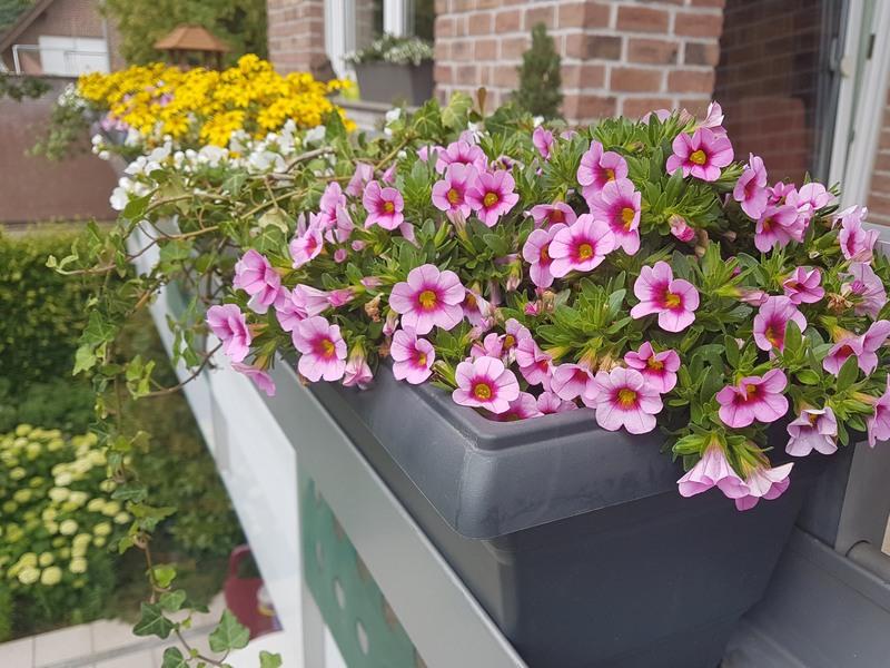 Balkon Blumenkasten