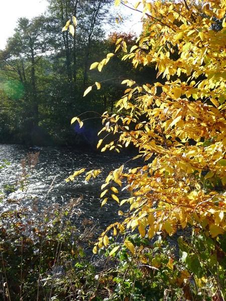 Herbstimpressionen Herbstblues