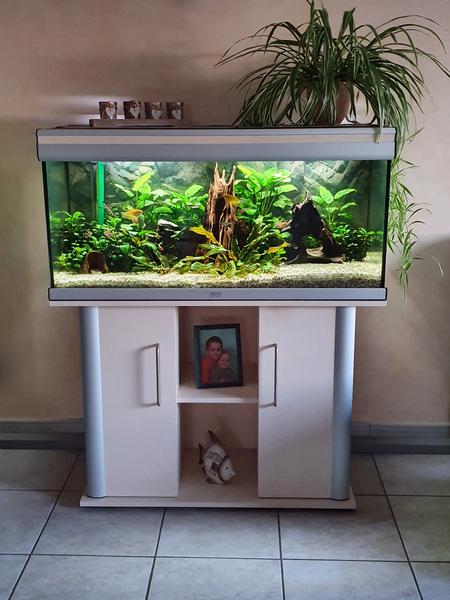 Aquaristik eine Leidenschaft