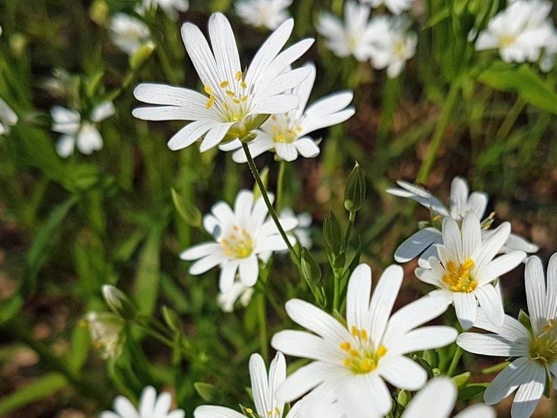 Blütenzauber Lebensfreude