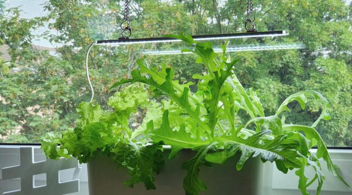 Nelson Garden Hydroponic Pflanzenkultur Harvy