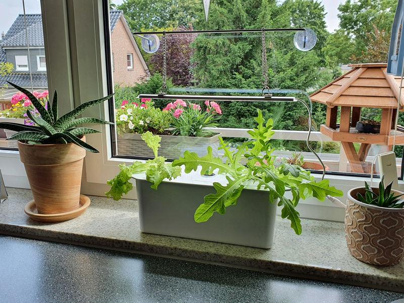 Nelson Garden Hydroponic Harvy Pflanzenkultur